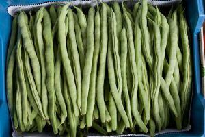 beans sxc.hu on maegal
