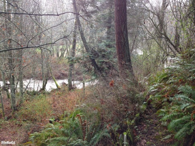 Rainy Pacific Northwest Creek | maegal.blogspot.com