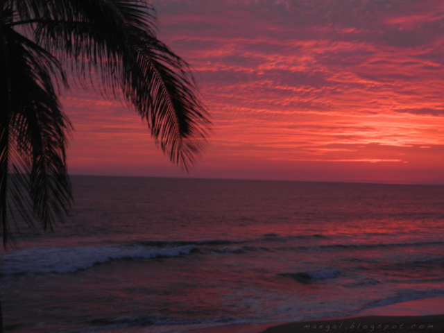 mazatlan sinaloa mexico sunset beach palm tree pacific ocean