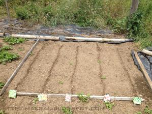 planting seeds  | maegal.blogspot.com